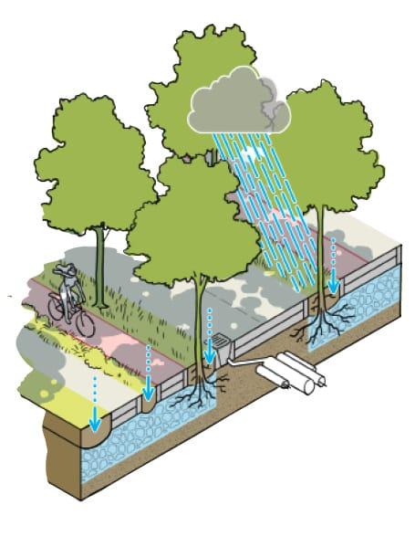 Querschnitt eines klimaangeapssten Straßenraums mit Schwammstadtprinzip